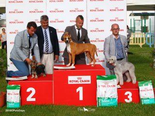 06_27ECM_Terriers_Cachorro