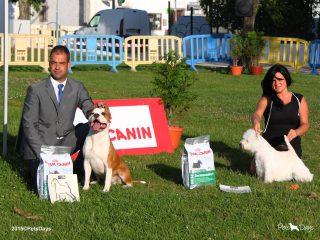 10_27ECM_Terriers_BIS