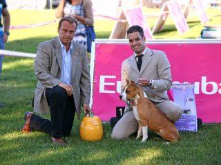 22ECM_Terriers_Cachorro